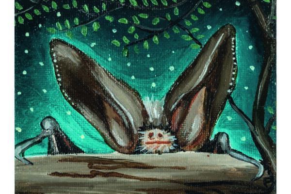 """""""E FU LA NOTTE"""": a Nuoro una mostra dedicata ai pipistrelli"""